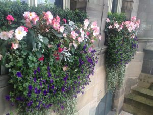 picture of a window box